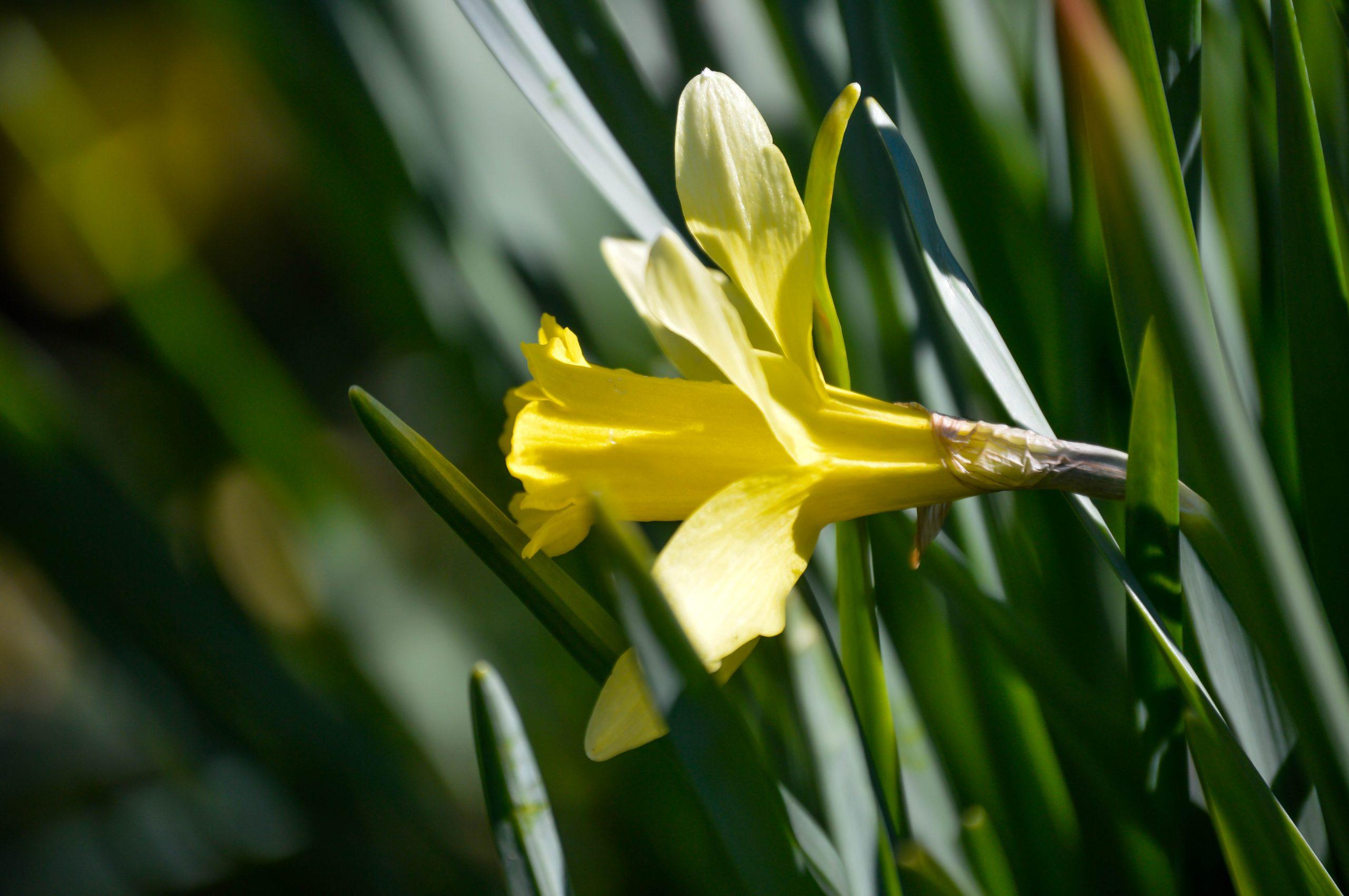 Yellow flower in East TN